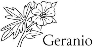 Geranio es una palabra que inicia con ge.